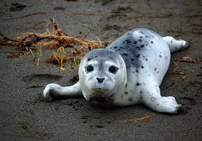 Strange Animals That Start With H Harbor Seal Cute Baby Animals Weird Animals