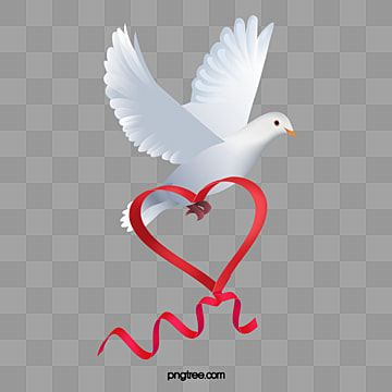 A White Dove Vector Material White Pigeon Vector Png Transparent Clipart Image And Psd File For Free Download White Doves Dove Pictures Peace Dove