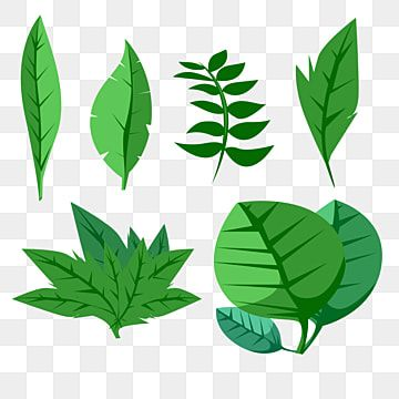 Vector Leaves Plants Daun Hijau Vector Leaves Plants Daun Hijau Green Tanaman Tumbuhan Png Transparent Clipart Image And Psd File For Free Download Leaves Vector Plant Illustration Leaves