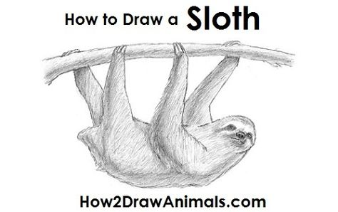 sloth drawing sloths pinterest sloth and animal