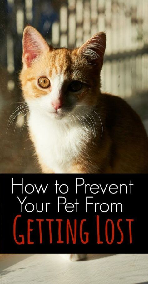 154 best Lost Pet Prevention images on Pinterest Lost pets, Your - lost pet poster template