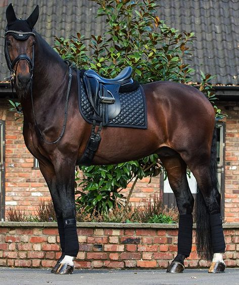 The most important role of equestrian clothing is for security Although horses can be trained they can be unforeseeable when provoked. Riders are susceptible while riding and handling horses, espec… Cute Horses, Pretty Horses, Horse Love, Horse Girl, Beautiful Horses, Horse Barns, Horse Tack, Horse Stalls, Horse Saddle Pads