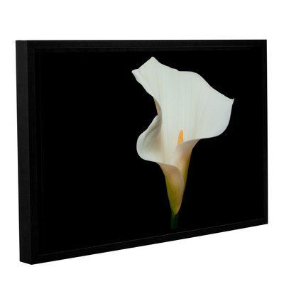 "House of Hampton Calla Lily Color Framed Photographic Print Size: 16"" H x 24"" W x 2"" D"