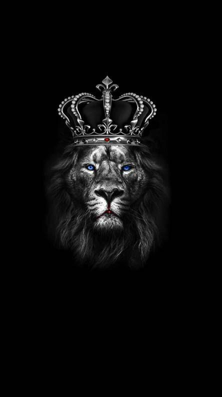 Fondos De Pantalla Gratis Zedge Lion Artwork Lion Wallpaper Black Background Wallpaper Hd black wallpaper download zedge
