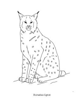 Eurasian Lynx Coloring Page Coloring Pages Animal Drawings Eurasian Lynx