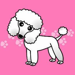 Cute White Poodle Cartoon Card Poodle Tattoo Poodle