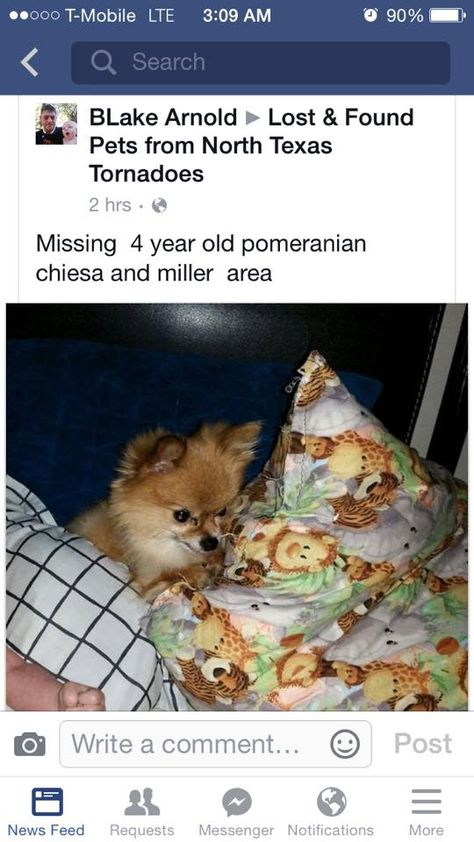 104 best Lost Dogs TX images on Pinterest Brown, God and I will - craigslist el paso