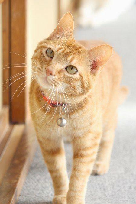 Ahh Beautiful Cat Names Female Xo Orange Tabby Cats Cute Cats Beautiful Cats