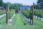 It's Delaware Wine Month throughout February, recognizing the four operating wineries in the state.