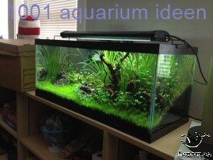 Aquarium Deko Ideen Ohne Wasser