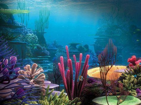 Arrecifes De Coral Paisajes Fondo De Pantalla Oceano Fundo