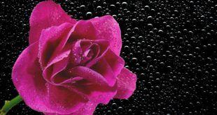 اجمل خلفيات لابتوب ماك Best Laptop Wallpapers 2019 Tecnologis Rose Wallpaper Rose Iphone Photography Apps