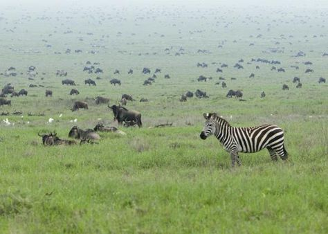Serengeti, Africa | Best places in the World