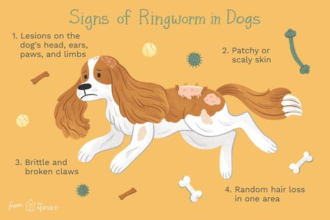 How To Treat Ringworm In Dogs Ringworm Dog Ringworm Dog Skin