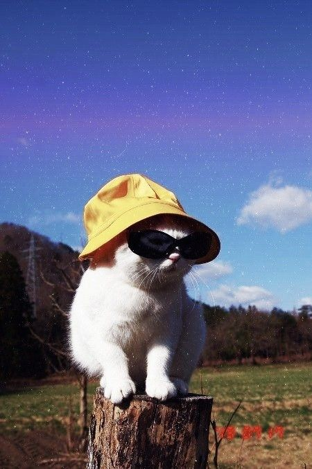 Cool Cat In 2021 Cat Aesthetic Cool Cats Cute Animals