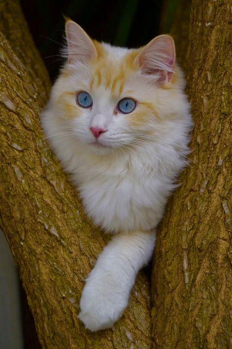 Causing mischief in a tree, K-I-T-T-Y, that's me!  #cat #rhyme #prettycats #beautifulcat #kitty