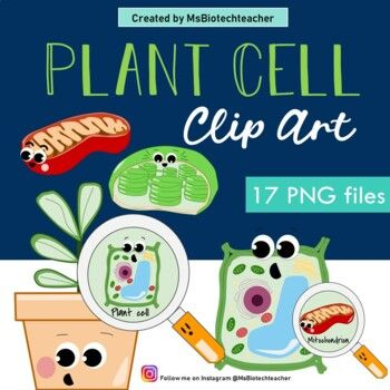 Plant Cell Clip Art Plant Cell Diagram Plant Cell Plant Cell Diagram Clip Art