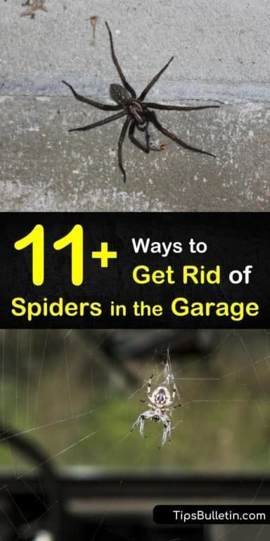 11 Clever Ways To Get Rid Of Spiders In The Garage Get Rid Of Spiders Cleaning Hacks Clean Garage