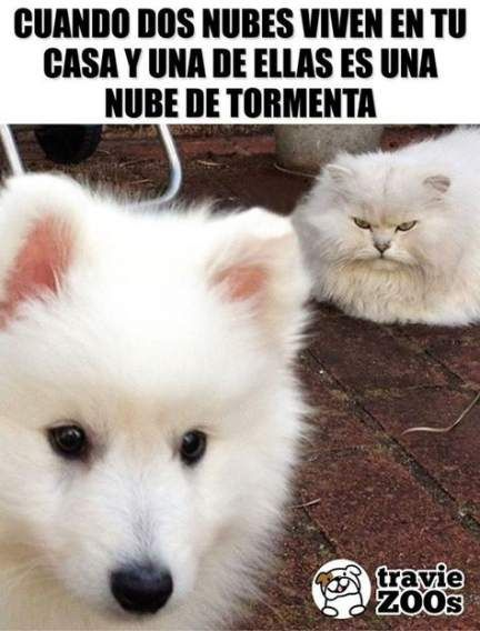 70 Trendy Memes De Amor Y Amistad New Memes Funny Movies Funny Memes