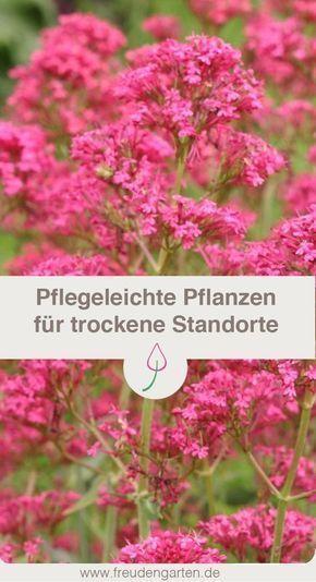 Pflanzen Fur Trockene Und Sonnige Standorte Blumen Fur Garten Pflanzen Pflegeleichte Pflanzen