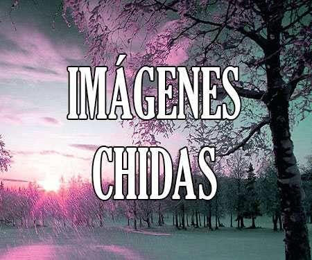 Imagenes Chidas Chingonas Perronas Con Frases De Amor Y De Todo