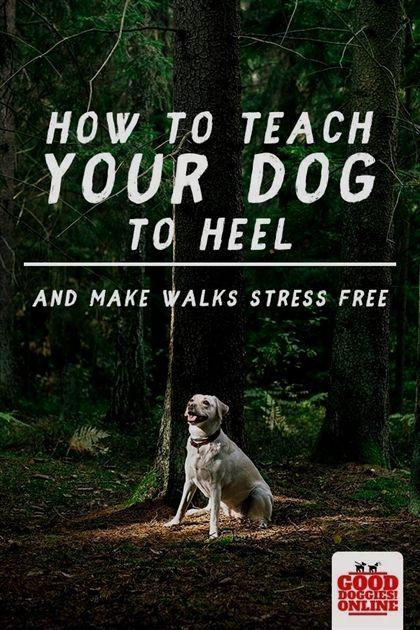 Dog Training Long Island Dog Training Yucca Valley Dog Training