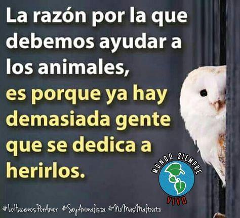Hay Que Ayudar Derechos De Los Animales Animales Y