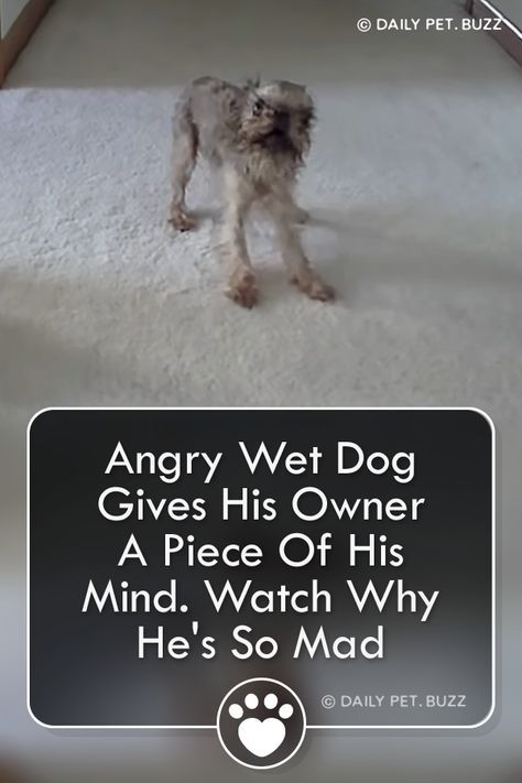 This Angry Wet Dog Is Not Impressed He Is Going To Make Sure His