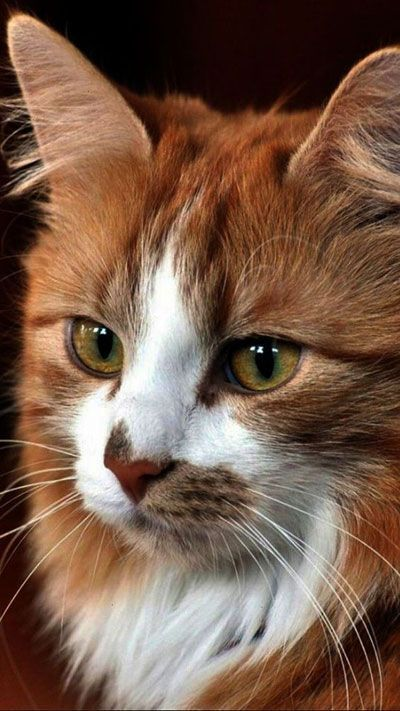 According To An Article By Live Science Cats And Other Sensitive Animals Like Dogs Or Deer Can See Certain Kinds Of Light Beautiful Cats Cute Cats Cool Cats