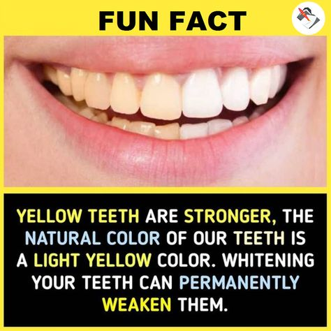 The strongest teeth are natural, healthy ones and these teeth are not white. At least, not white like the color of paper, or even the color of piano keys. They are a couple of shades darker than that! 😁   #primewritings_com #funfact #fact #teeth #information #writingservice #paper