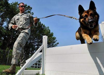 Solutions On How To Train A Dog Ensures Better Lifestyle Of Your