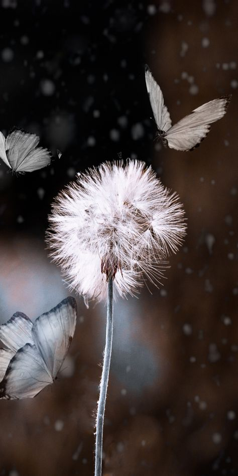 Bokeh, dandelion and butterfly, blur, 1080x2160 wallpaper