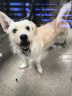 Adopt Buddy On Petfinder Dog Adoption Help Homeless Pets Animal Behaviorist