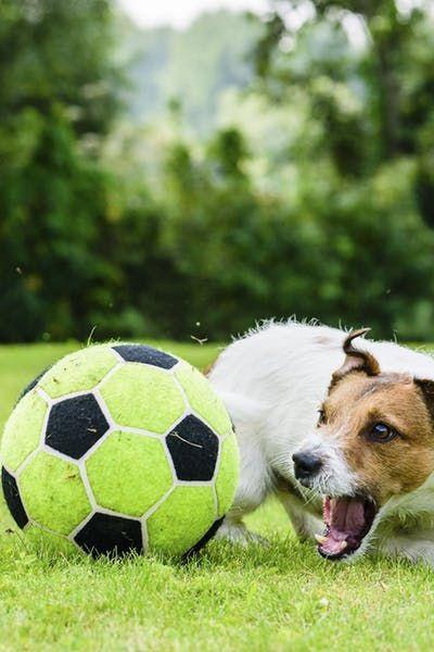 Soccer Inspired Dog Names Soccerdog Airbud Dognames Top Dog Names Dog Names Dogs