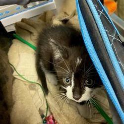 Austin Animal Center In Austin Texas In 2020 Pet Adoption Kitten Adoption Puppy Adoption