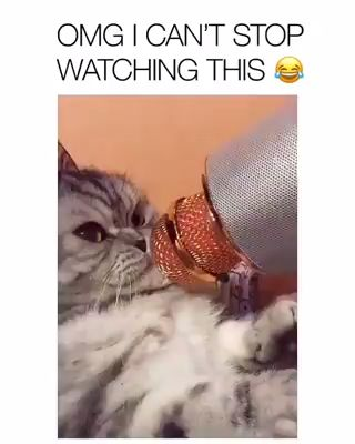 cute cat video story | funny cats and kittens videos stories #cats #kittens #pets #animals