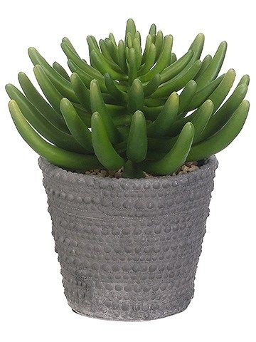 9 Aeonium In Cement Pot Faux Trees N Shrubs Foliage Plants Cement Planters Potted Trees