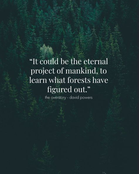 Nature forest quote