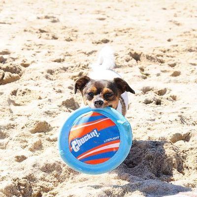 All Sizes Of Dogs Enjoy The Chuckit Lite Flight Dogs Pet Mat