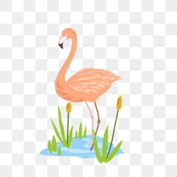 Flamingo Picture Flamingo Clipart Flamingo Picture Material Download Flamingbird Png Transparent Clipart Image And Psd File For Free Download Flamingo Pictures Flamingo Illustration Creative Background