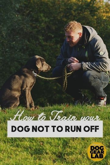 How To Teaching Your Dog To Heel In 2020 Your Dog Dogs