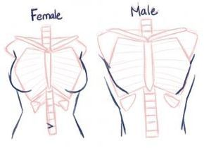 Useful For General Distinction At The Sketch Level Guided Drawing Drawing Tutorial Drawing Tips