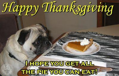 Funny Pug Dog Meme Pun Lol Thanksgiving Pug Pugs Funny Pugs Funny Dog Pictures