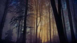 Escape The Day Medvednica Croatia Lock Screen Wallpaper Foggy Forest Feature Wallpaper