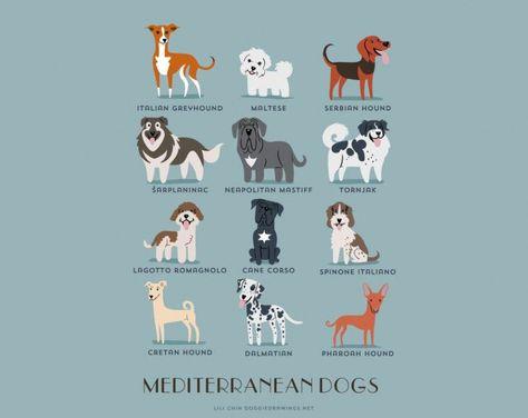 Cuáles son los orígenes de las razas de perro