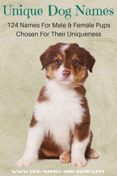 Unique Dog Names Helpful Guide To Finding The Best Name With