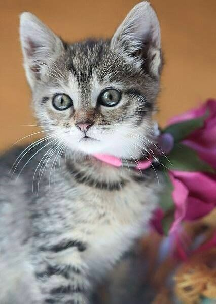 Pin By Linda Kortright On Kittens Cats 3 Cute Cats Photos Cute Cats Pretty Cats