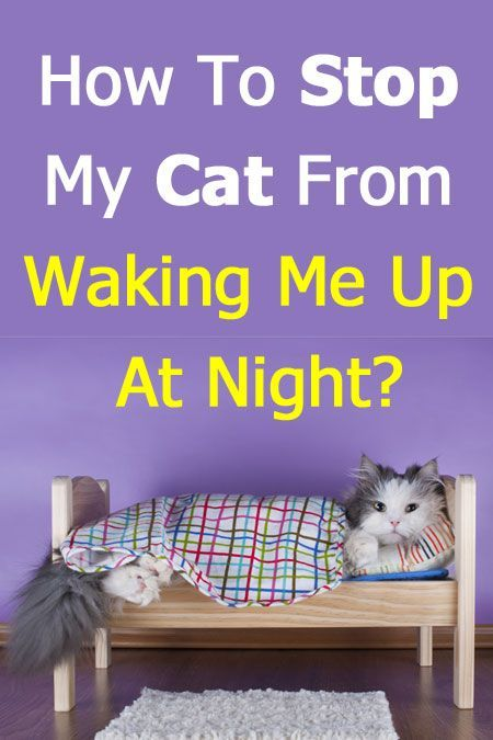 How To Stop My Cat From Waking Me Up At Night Step By Step Plan Cat Meowing At Night Cat Training Cat Care