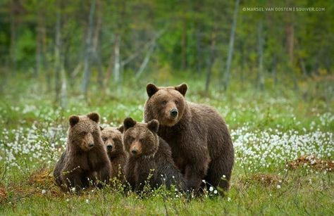 Beautiful Animal Family Portraits You Will Want To Put Over Your Fireplace