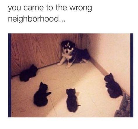 The Ultimate Kitten Dump (13 Pics)